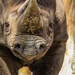 hi it's me miss rhino