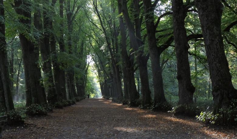 Groenendaalse Bos  - Een van de prachtige boomlanen in het Groenendaalse Bos.