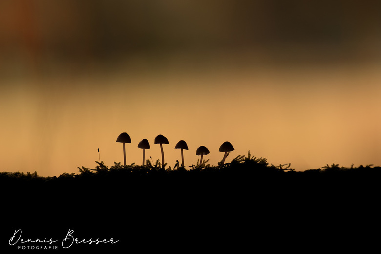 Silhouet of Mushrooms  - Silhouet of Mushrooms