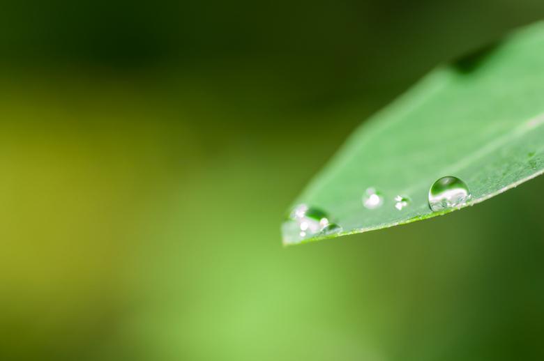 Druppels... - Na een korte zomerse regenbui, meteen naar buiten gegaan om een paar druppels te fotograferen.