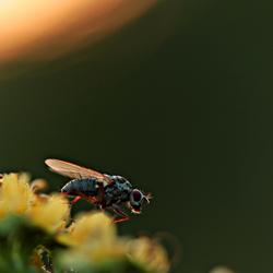 vlieg met tegenlicht