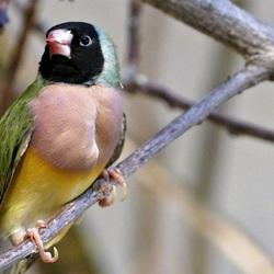 vogel ???