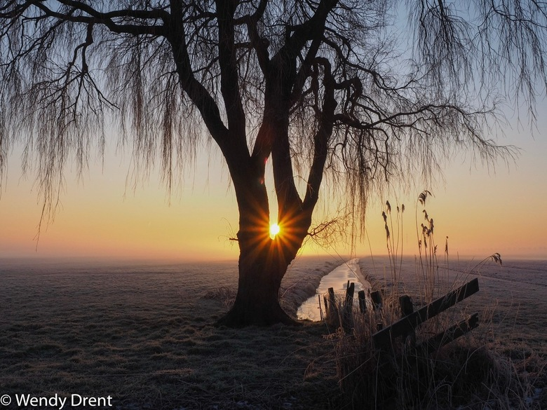 Weeping Willow - Mooie treurwilg gefotografeerd tijdens zonsopkomst in een Noord-Hollandse polder. Het was ontzettend koud, maar wel prachtig om er te