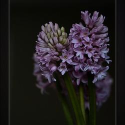 """""""Purple & Beautiful"""""""