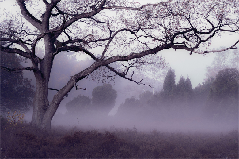 misty morning - vroeg in de morgen<br /> als de mist de bomen raakt<br /> ademloos zwijgen
