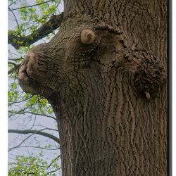 houten hond.jpg