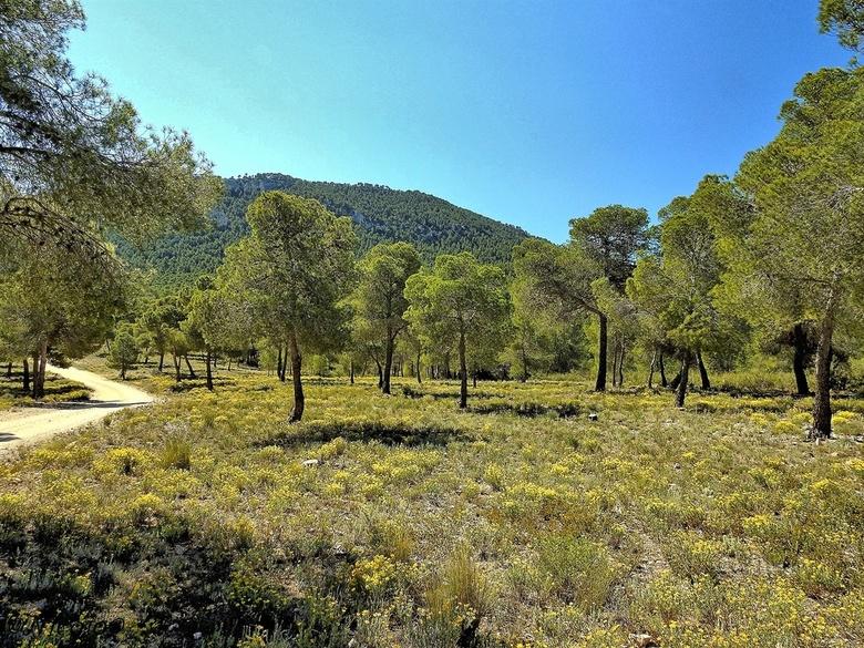 Voorjaar..... - Regelmatig bezoeken we het nationaal park de Sierra de la Pila om te zien hoe de natuur zich ontwikkelt. Het is zeer afhankelijk van d