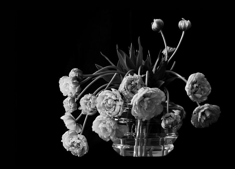 Pioenen of tulpen? - Verrassing: combinatie van!<br /> Prachtige bloemen....