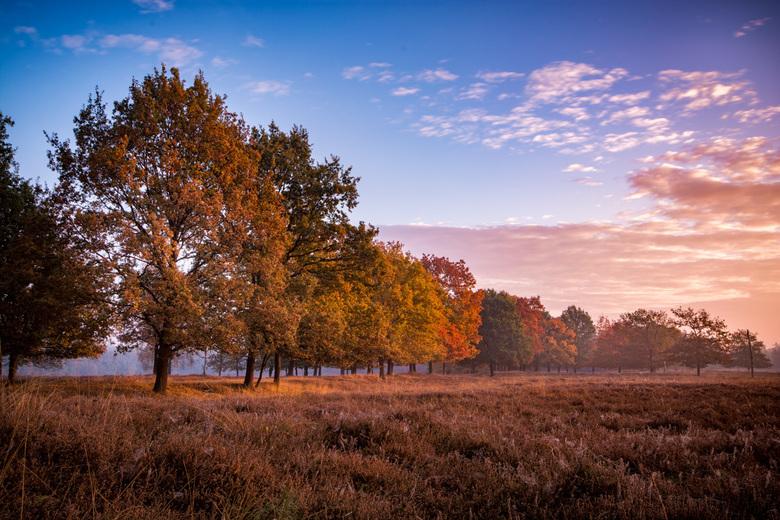 Autumn in full color - Herperduin in schitterende herfstkleuren