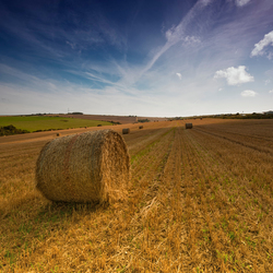 Straw on the hill