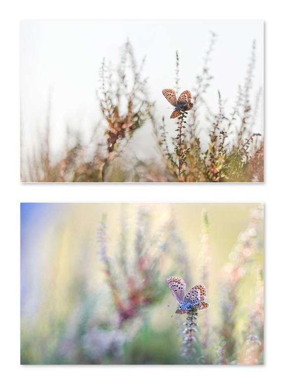 Significant verschil - De bovenste opname (f/3.5) is van onderaf gefotografeerd waardoor de lucht erg licht is met groot contrast, terwijl de onderste