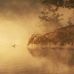 Gouden ochtendmist in de herfst