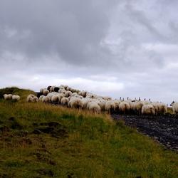 Typisch IJslands