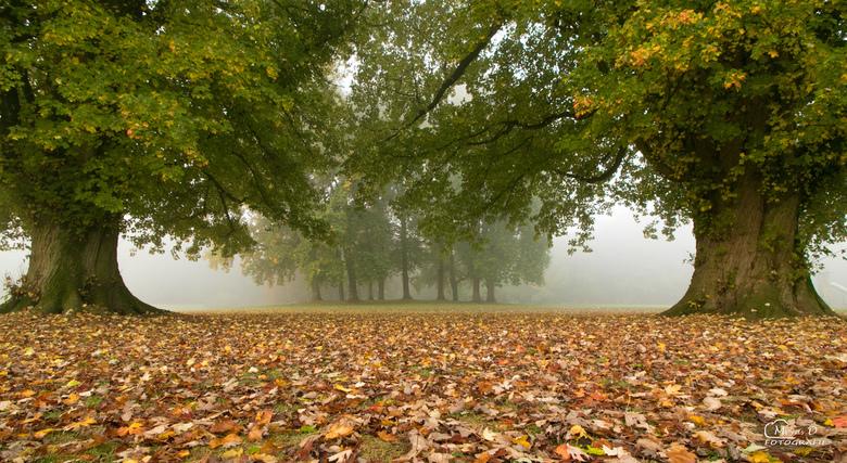 Op een mistige ochtend ergens in november -