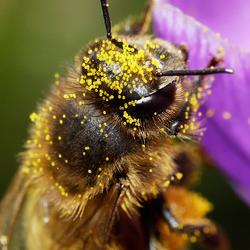 PollenHead