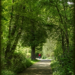 Wandeling in het voorjaarsbos