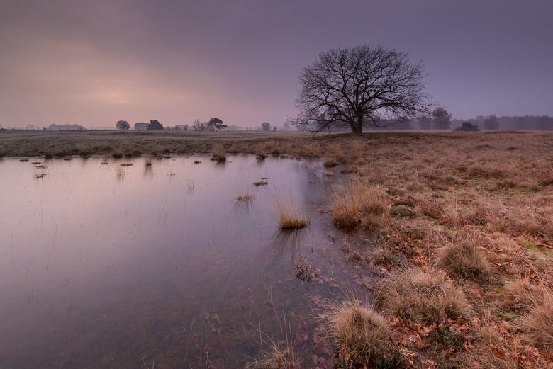 Strabrechtse Heide 308 - Op een koude regenachtige wintermorgen wist de zon, ondanks de volledige bewolking, toch wat kleur in de wolken te brengen. H