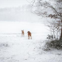 Afwachtend in de sneeuw
