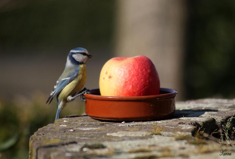 kind eet appel