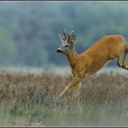 Elegante sprongen