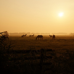 Vroege ochtend in mist