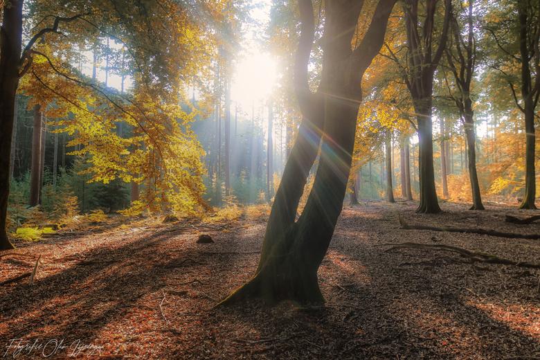 dat herfst gevoel...... -