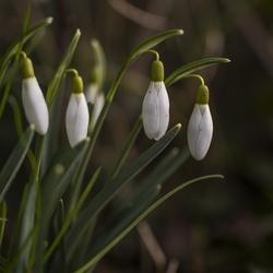 voorjaarsbode op landgoed Bingerden
