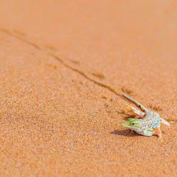 desert lover