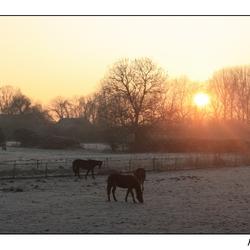 ochtend in Zeeuws-Vlaanderen