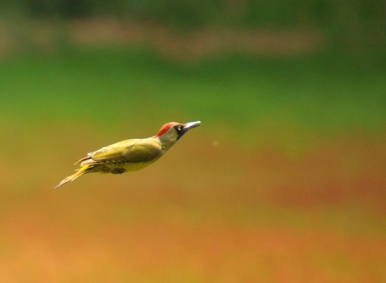 Vliegen zonder vleugels - Op grote afstand vast kunnen leggen