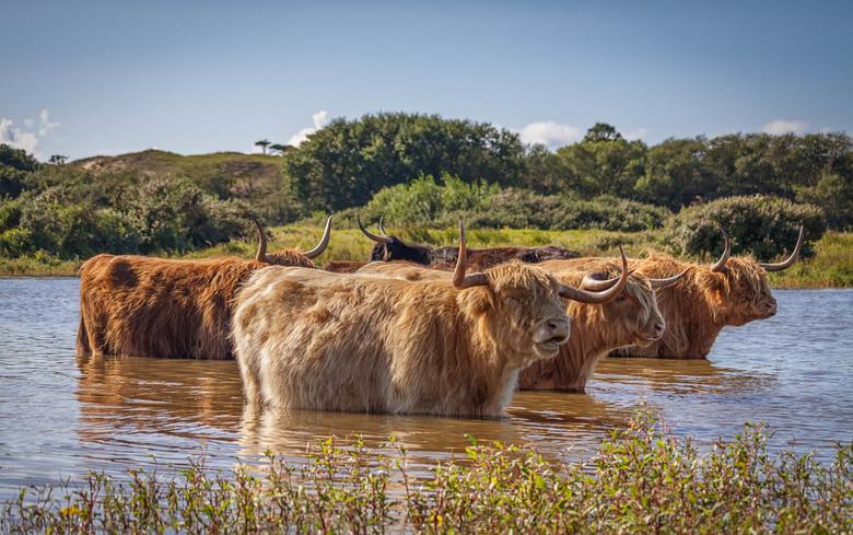 """Warm Wildlife - Op een warme zomerdag <img  src=""""/images/smileys/smile.png""""/>. Alle dames het meer in, prachtig gezicht !"""
