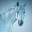 Horse 018