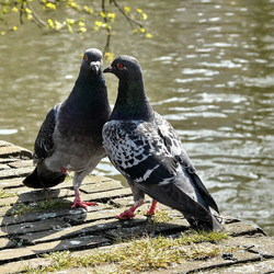 Vogel serie 107. liefdegevoelens.