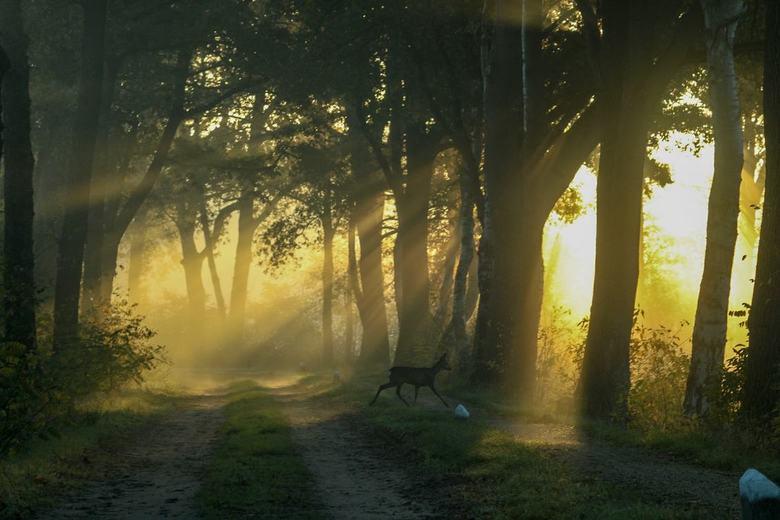 Mooie zonsopkomst in de Achterhoek -