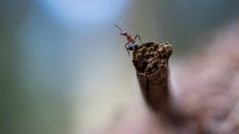 Ik ruik de herfst - Vanmiddag weer ff de rust op gezocht in Dorst....nouja rust...de mieren waren toch druk bezig om hun onderkomen winter klaar te ma