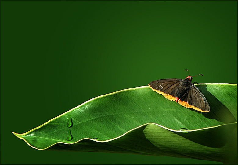vlindertje - Tuinfotografie in Paramaribo.