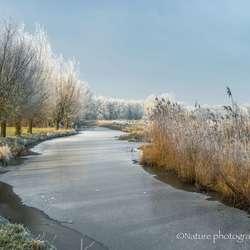 bevroren polder