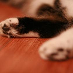 Katten poten