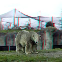 Polar Bear Blijdorp Zoo 3D anaglyph