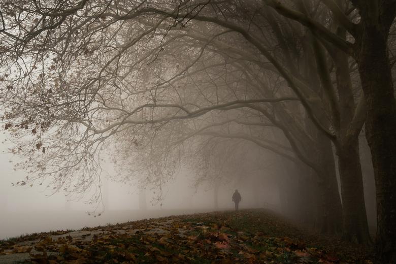 Onder de trieste bomen - Dit is toch wel een beetje de sfeer die er de laatste dagen buiten is: donker, grauw... In tegenstelling tot de lichtjes die