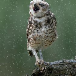 Lekker, regen.