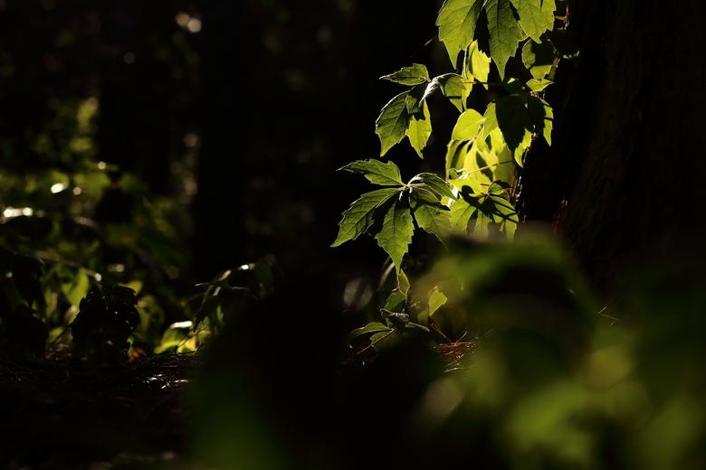 Avond in het bos - Een avondje het bos in geweest voor wat creatieve natuur fotografie. <br /> Heerlijk om gewoon even op pad te zijn.