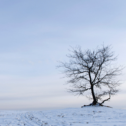Tree in Snow.jpg