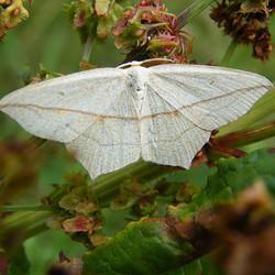 vlinder of een mot