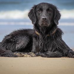 Zon zee strand en een (zee)hond