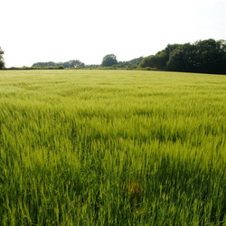 Groene vlakte op de brabantse wal