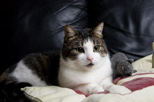 Katoo le chat - Onze kat