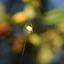 colourful web