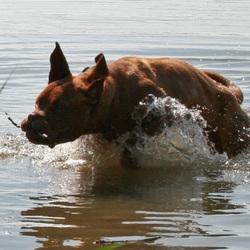 Baloe in water
