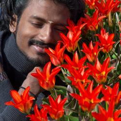 Indiër verliefd op tulpen